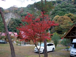 20081122- (6).JPG