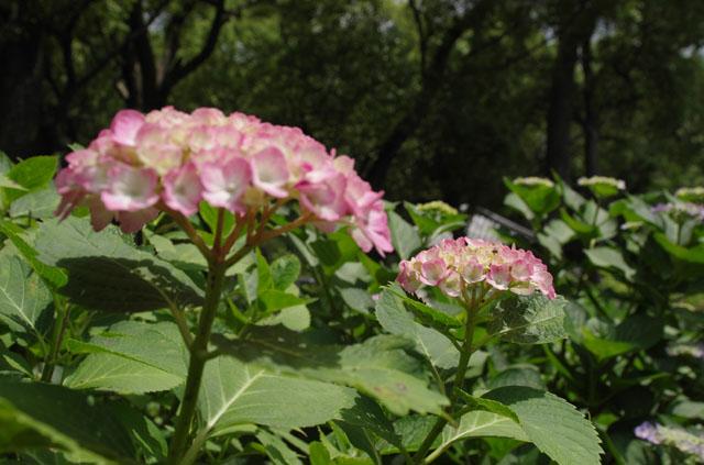 20120610-04.jpg