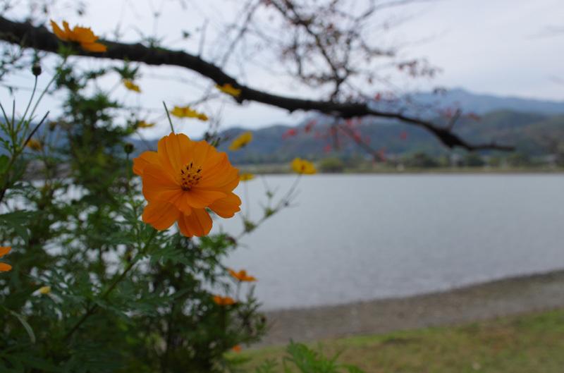 20141108-11.jpg